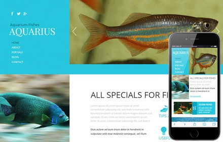 Aquarius a Animal Category Flat Bootstrap Responsive web template